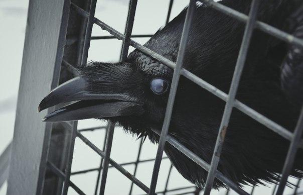 Pájaro en problemas